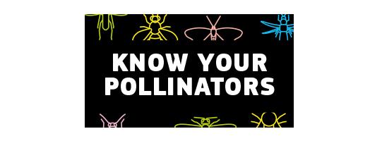 immagine Know your pollinators