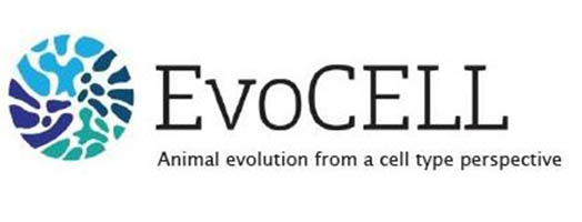 immagine EVOCELL – Animal evolution from a cell type perspective: multidisciplinary training in single-cell genomics, evo-devo and in science outreach