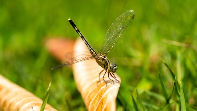 immagine In my backyard